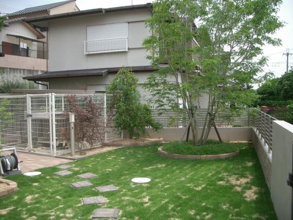シマトネリコの素敵な芝生の庭 岩出市1