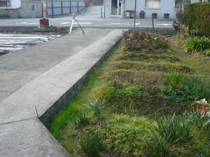 イブキの生垣を撤去して庭の改修 明るい庭になりました。5