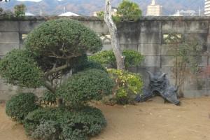 新築のため潰してしまった裏庭の改修 3