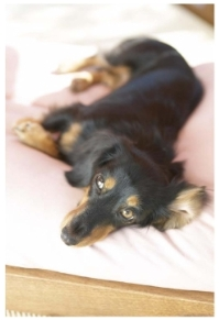 小型犬・大型犬用マット 消臭効果 ひばdeロール 3