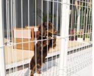 小型犬 トイ・プードル ミニチュアダックス dogフェンス